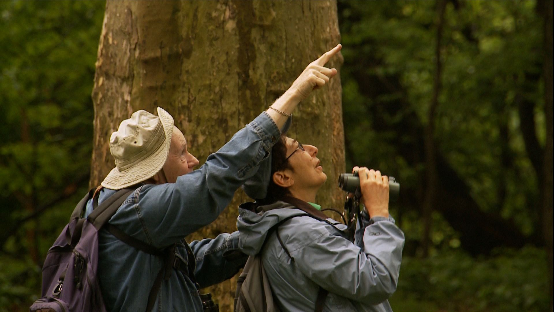 Birders: The Central Park Effect Screening March 17 at 7 ...